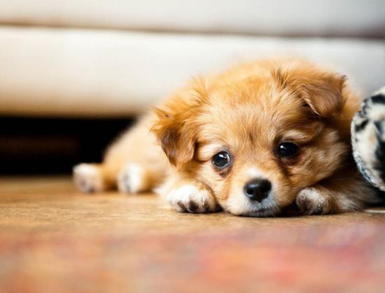 犬の災害避難に必要なリスト