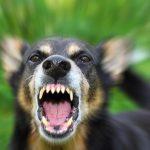 犬の無駄吠えの 直し方!チャイムに反応するのはなぜ?タイプ別原因と対策法