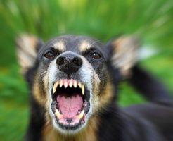 犬の無駄吠えインターフォン
