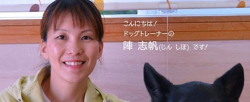 飯嶋志帆しほ先生の犬の躾教材