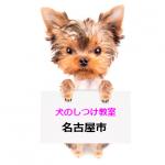 【保存版】犬のしつけ教室名古屋市内16区一覧