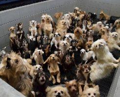 犬の繁殖所の実態福井県