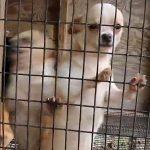 ユーチューブ【動画】犬の繁殖所悪質ブリーダーの実態!You-Tubeで告発!