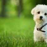 イヌバーシティ(わんバーシティ)ラジオで話題の犬のしつけ教材
