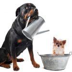 犬のしつけ教室の料金・種類別の相場