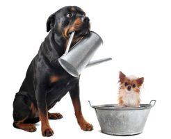 犬のしつけ教室の値段の相場shutterstock_120396361