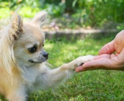 犬のしつけ教室のメリットとデメリットshutterstock_246587320