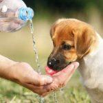 犬の熱中症の症状は?吐く・痙攣時の対処法!対策グッズも紹介