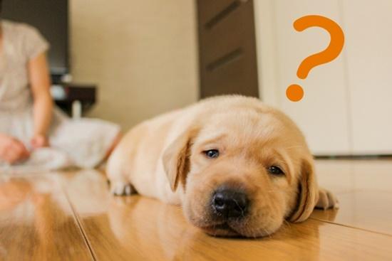 犬の去勢・避妊をする時期は?