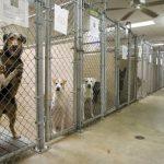 アメリカで飼育放棄される犬の数や頭数、アニマルシェルターの実態をレポート!