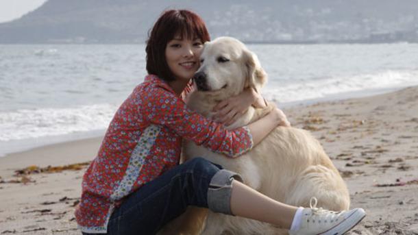 『犬と私の10の約束』を無料で見る方法