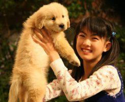 犬の十戒原文と翻訳全文紹介