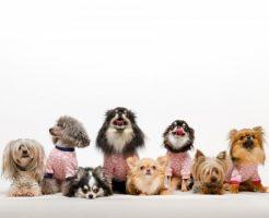 犬のしつけ教室公共23区一覧