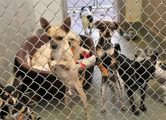 アメリカで殺処分される犬の数と保護犬の数