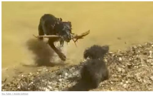 犬の水中毒の対処法