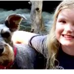 犬の【水中毒】水遊び・プールに潜む危険!症状と予防法は?対処法まで!