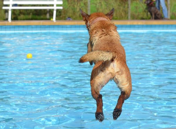 イヌバーシティ犬の躾