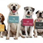 犬の安楽死・アメリカの場合薬は使うの?苦しいの?に答えます!
