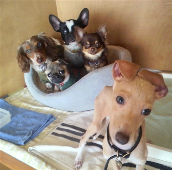 坂上さんの家の犬たち